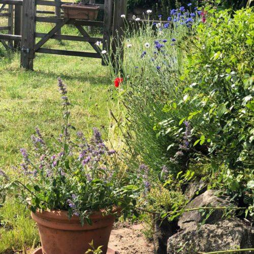 Blühstreifen am Rasenrand angelegt