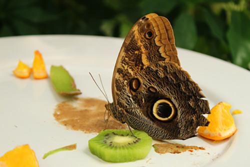 Schmetterlingsrettung