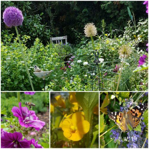 Wilde Ecke mit Paradies für Wildbienen