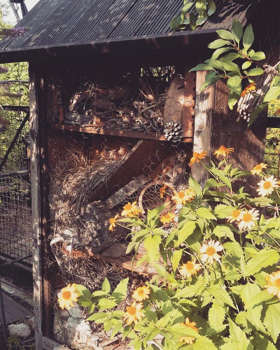 Ein Zuhause für Insekten in meinem Garten