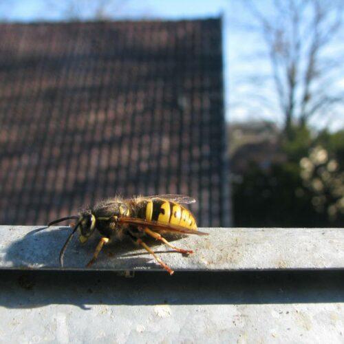 Neuer Lebensraum für Insekten