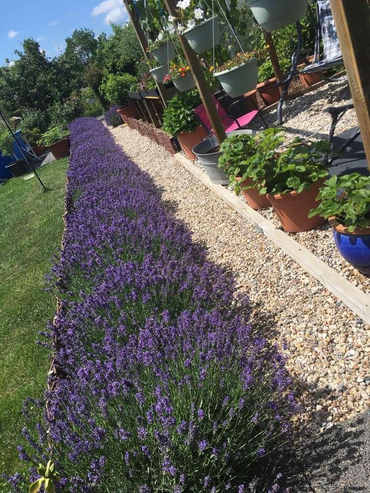 Lavendelliebe