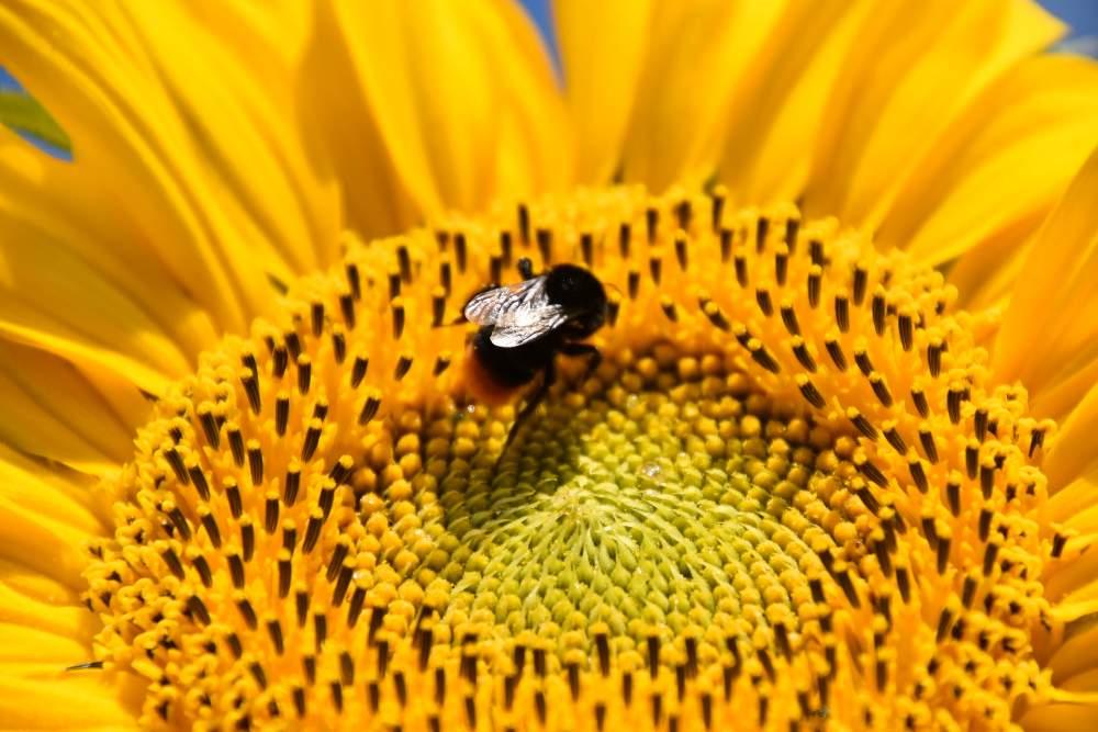 Vom Steingarten zum Insektengarten