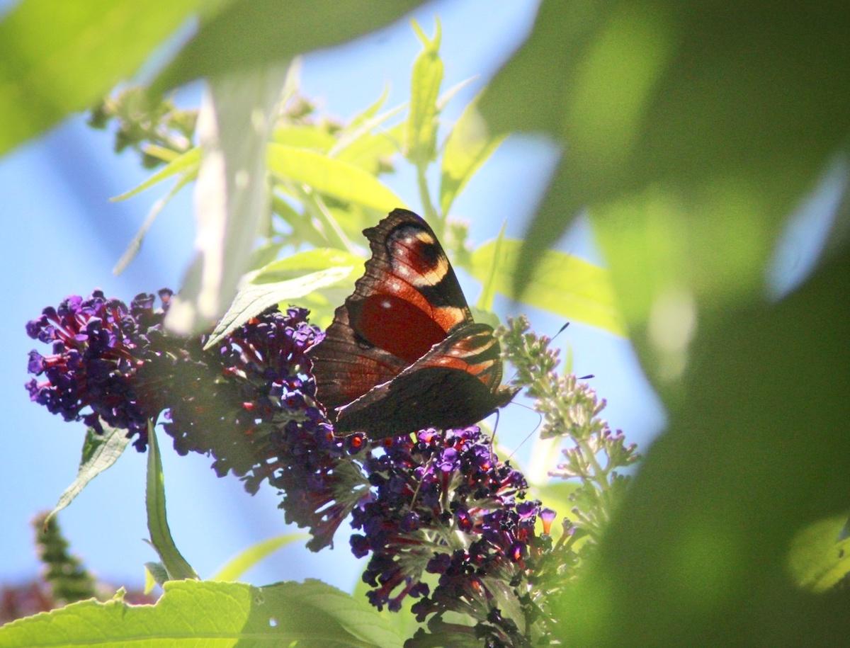 Spaßbilder von diversen Insekten