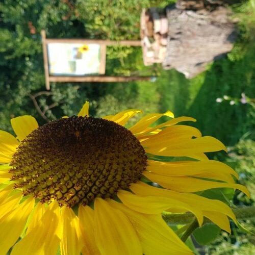 Natur schützen, heisst Natur verstehen