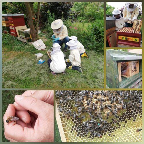1. Platz: Imkern im Kindergarten-Mit Kindern im Bienengarten