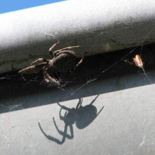Grabeland in Insektenhand